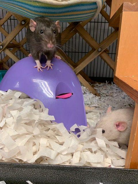 tea bag bedding for rats